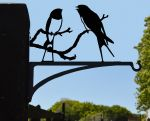 Swallows Hanging Basket Bracket